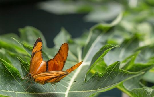 140901_kdi_BirdsButterflies137