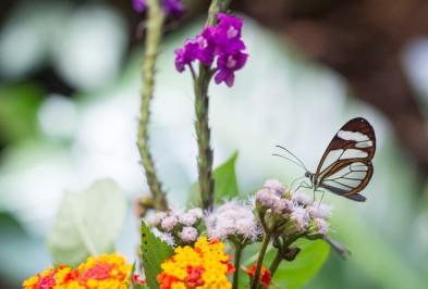 140901_kdi_BirdsButterflies141