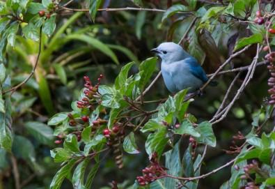 140120_kdi_Coffee_birding228