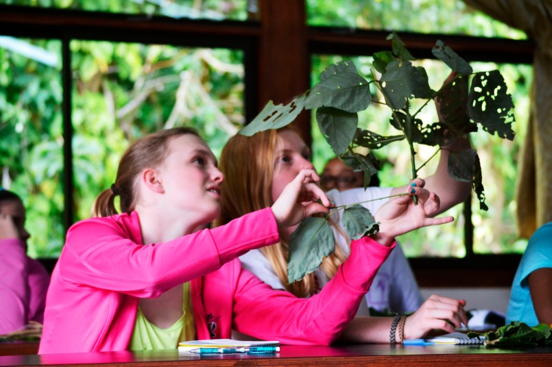 Students hold the leaf up to the light, looking first at the web-like veins, and then for lighter spots or oil glands, typical in plants in the Rutaceae family.