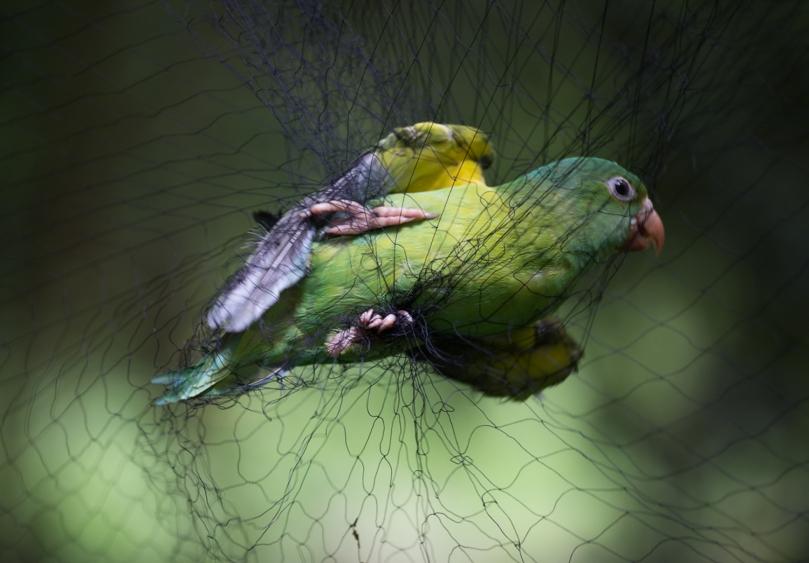 160622_REE_UGACR_Birds_0057