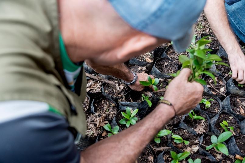"""Lucas trasplantando plántulas de Manilkara chicle """"Zapote lechoso"""" en bolsas de almácigo // Lucas transplanting seedlings of Manilkara chicle """"Zapote lechoso"""" into soil bags."""